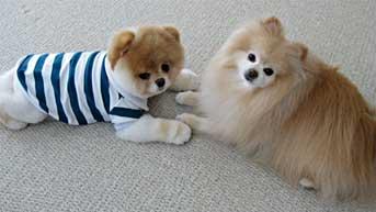 Boo&Buddy