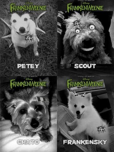 Boo Frankenweenie Pics!