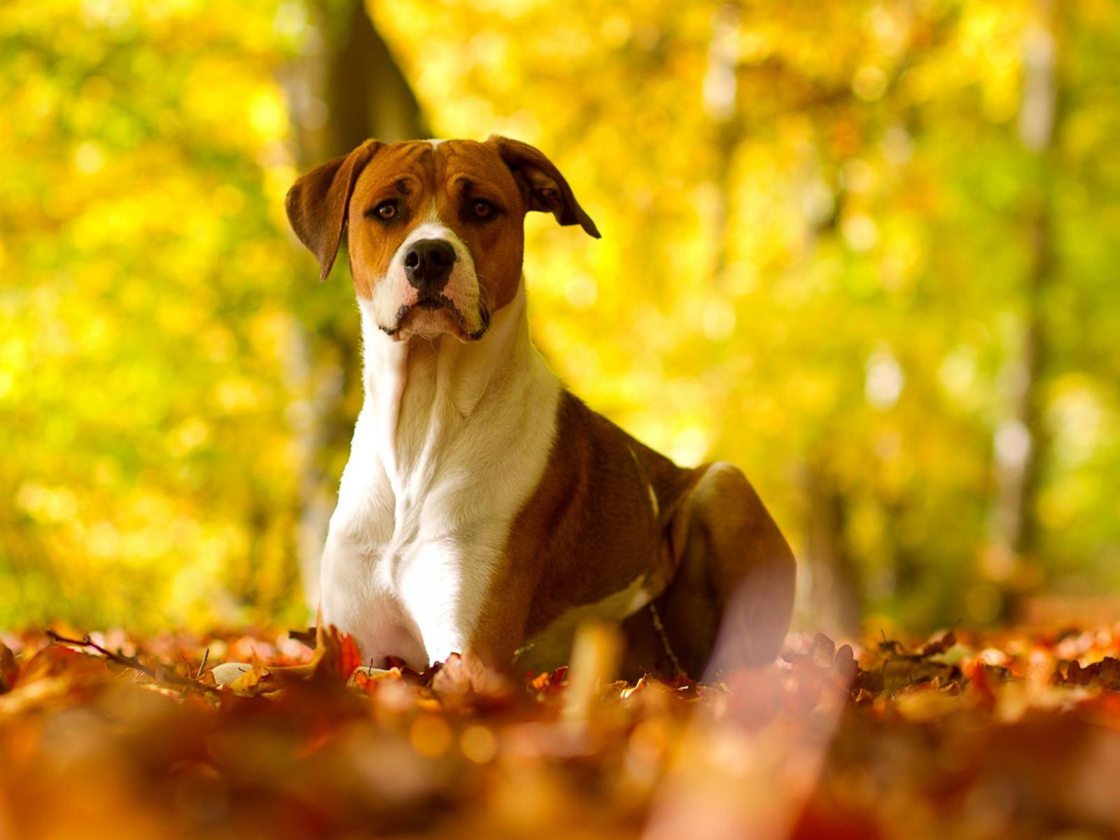 Dog Dogs Wallpaper 32691594 Fanpop