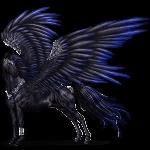 GA Pegasus Coats