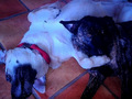 Kristen and Rob's dogs,Bernie and Bear - robert-pattinson-and-kristen-stewart photo