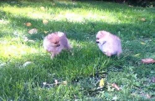 Lulu and Libby