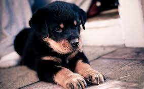 Mel's puppy! X3