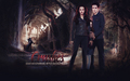 twilight-series - Mother's Love wallpaper