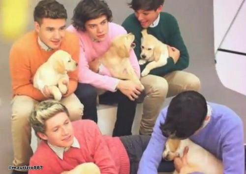 One Direction x Wonderland foto Shoot