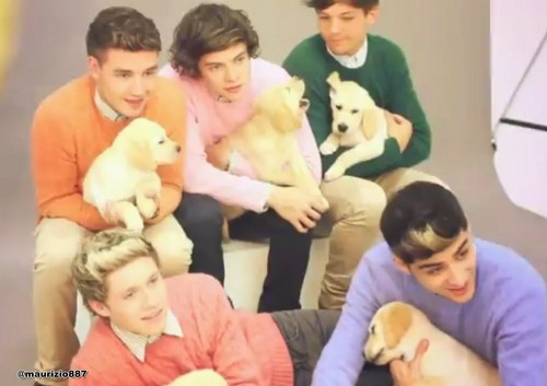 One Direction x Wonderland foto Shoot