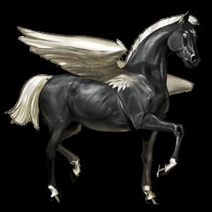 Pegasus Coats