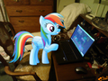 RD on da computer - rainbow-dash photo