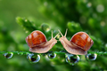 Snails  - animals photo