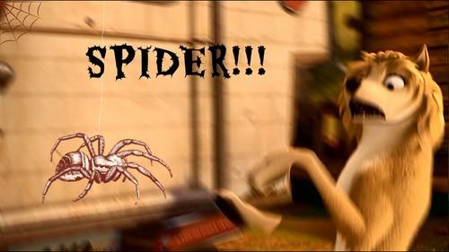 Spider!!!