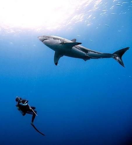 Underwater Fotografia wallpaper called Underwater