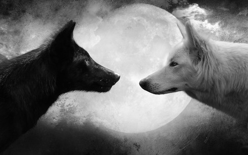 Animals wallpaper titled Wolfs