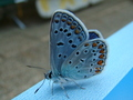 butterfly - butterflies photo