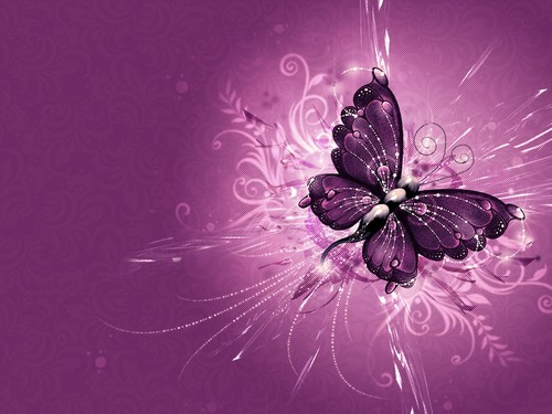 Butterflies images butterfly HD wallpaper and background photos