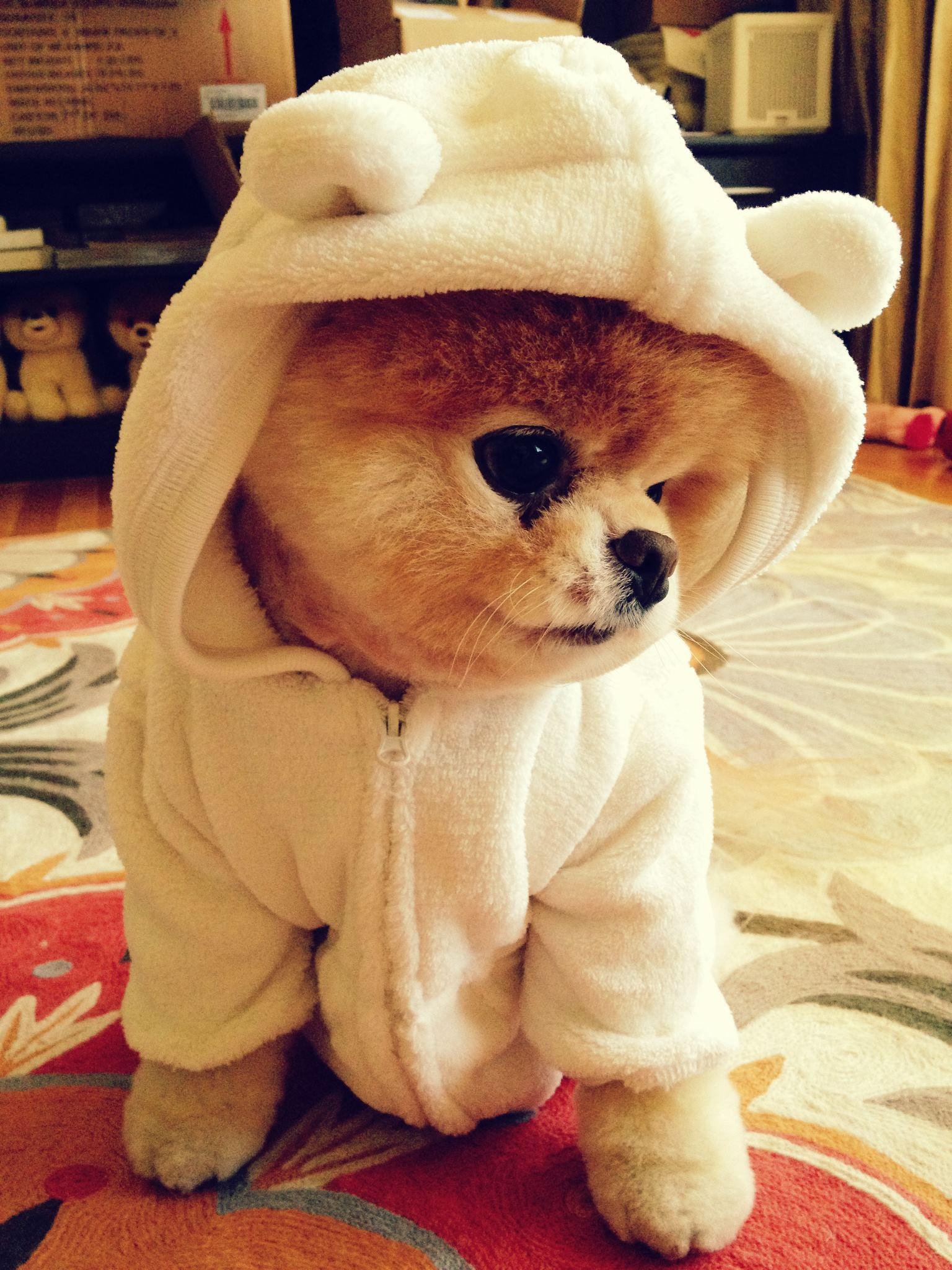 Boo Teddy Bear Dog