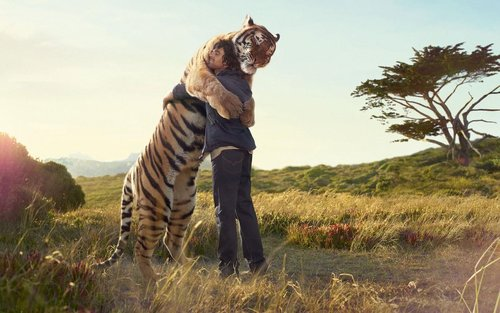 Get a hug from a tiger