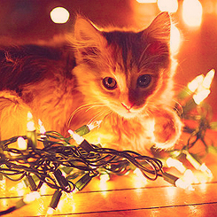 Kitty/Lights