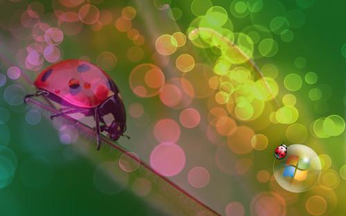 Ladybug achtergrond