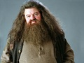 Rubeus Hagrid Wallpaper - hogwarts-professors wallpaper