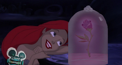 The Siren and the Rose