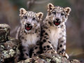 baby-cheetah - animal-rights wallpaper