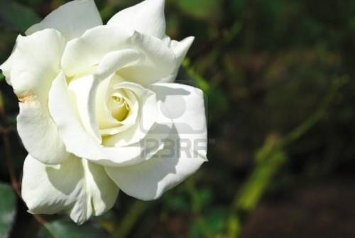 beautiful biedronka цветок