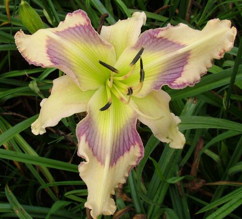 beautiful biedronka fiore