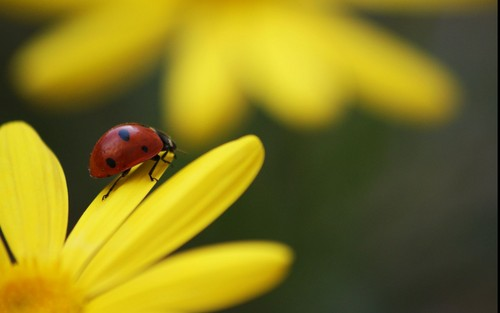 beautiful ladybugs
