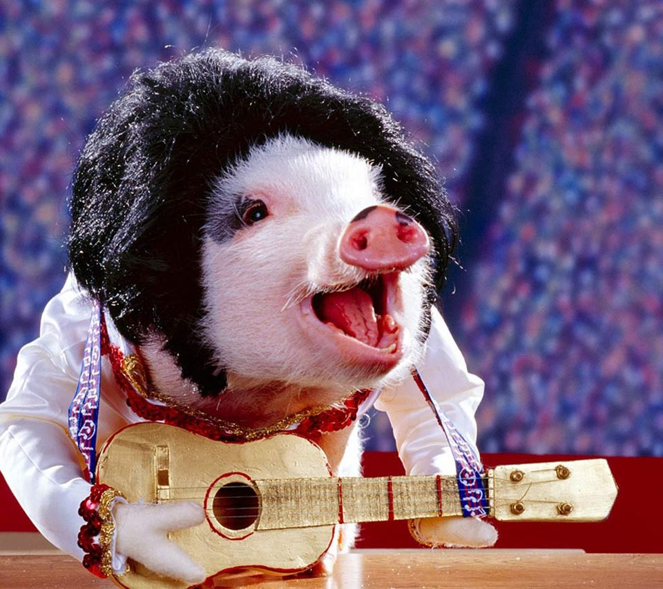 msyugioh123 images funny guitar pig HD wallpaper and background photos