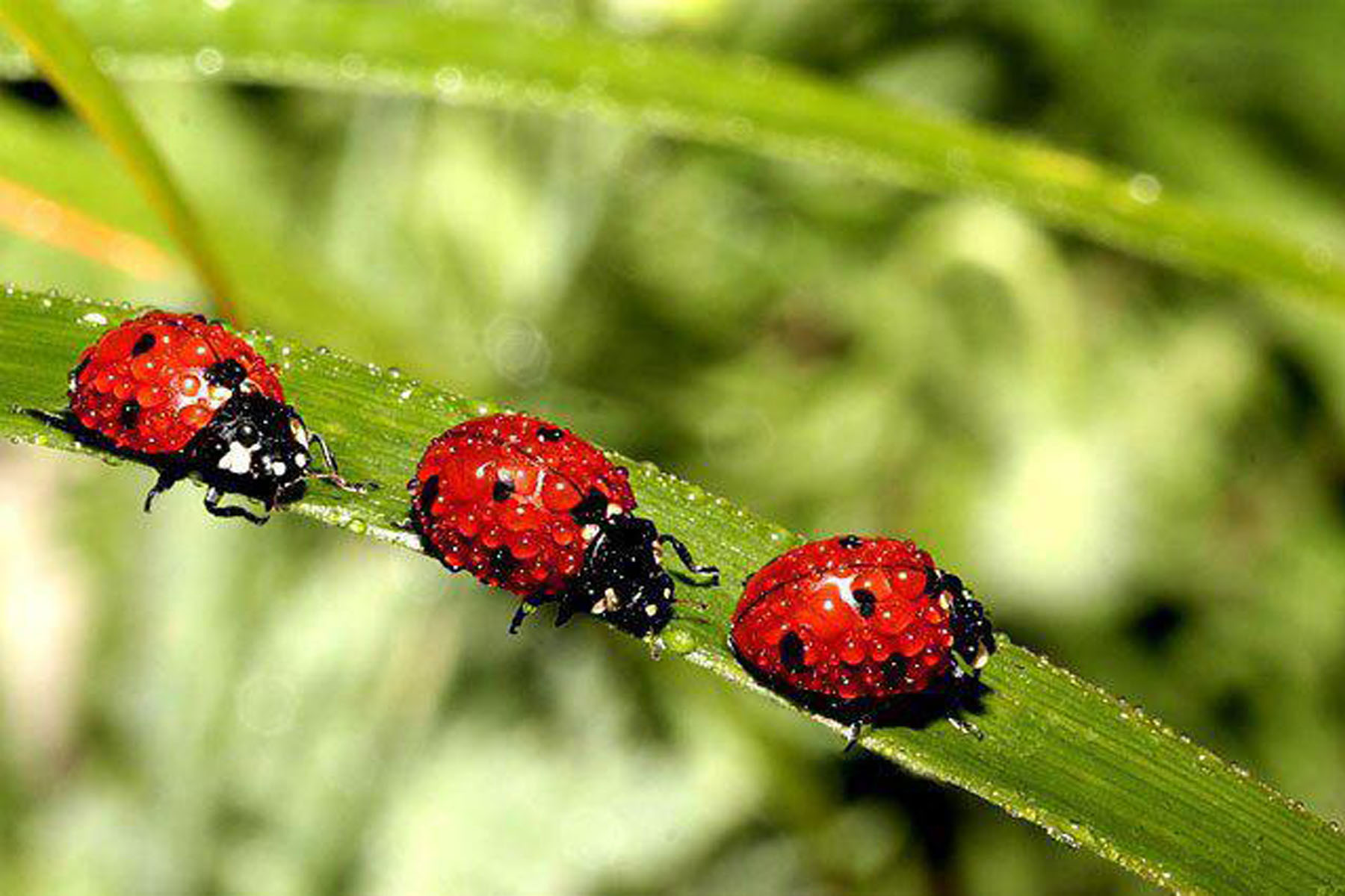 Pictures Of Ladybugs 55
