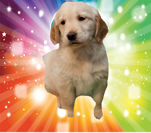 Puppies wallpaper with a golden retriever entitled puppies