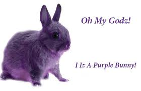 purple bunnie