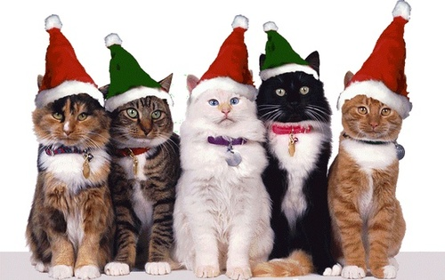 ★ Pets l'amour Christmas too ☆
