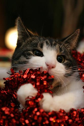 ★ Pets Cinta Krismas too ☆