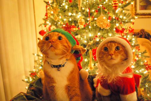 ★ Pets 사랑 크리스마스 too ☆