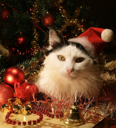 ★ Pets love Christmas too ☆