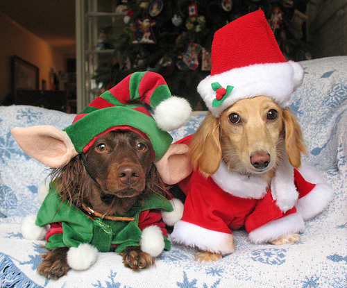 ★ Pets love Christmas too ☆