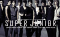 ♥Super Junior♥ - beast-snsd-super-junior wallpaper