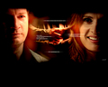 Castle and Beckett - BEST HANDSHAKE EVER...Caskett - castle-and-beckett wallpaper