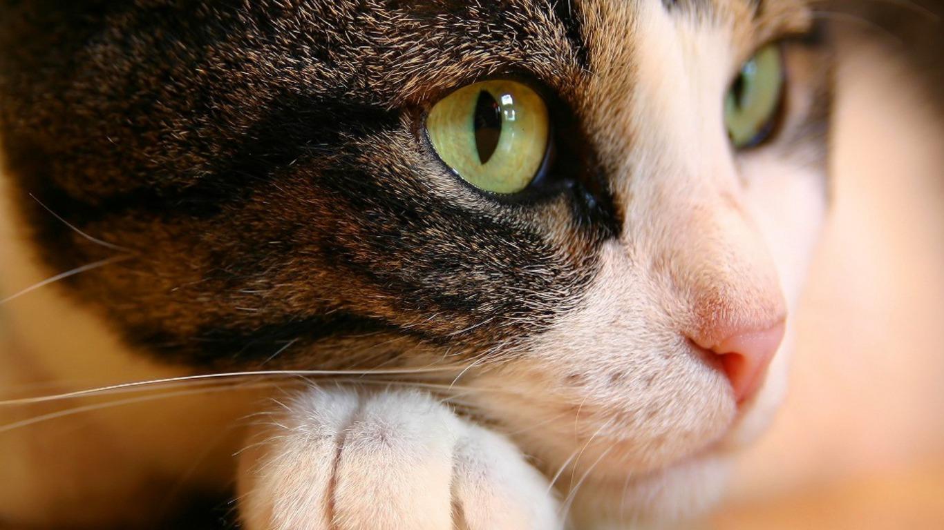 Cats - Cats Photo (32853212) - Fanpop