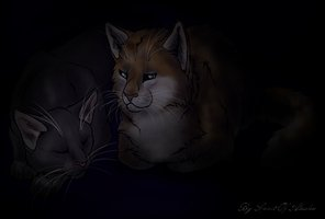 Forever Warriors Cats Images Hollyleaf And Fallen Leaves Wallpaper Background Photos