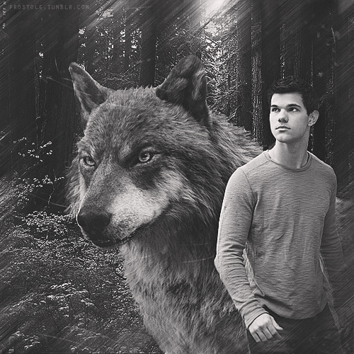 Jacob Black wallpaper containing a timber wolf called Jacob - BDp2