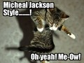 Micheal Jackson Cat - michael-jackson photo
