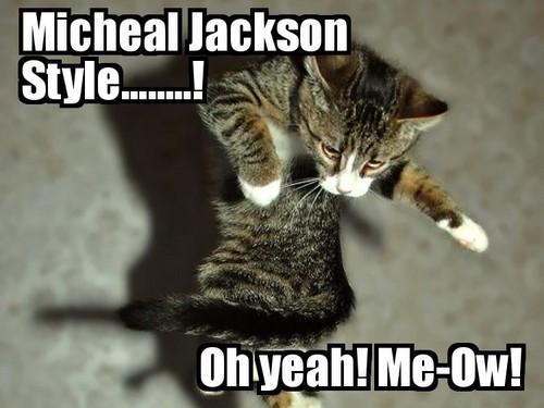 Micheal Jackson Cat