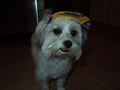 My Puppy! :) In her little hat
