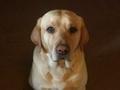 My sweet dog,Sam.