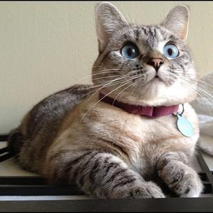 Nala The Cat