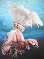 Norbert Wu, Gossamer Jellyfish