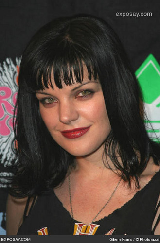 Pauley Perrette wallpaper containing a portrait called Pauley Perrette