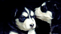 Puppies  - dogs wallpaper